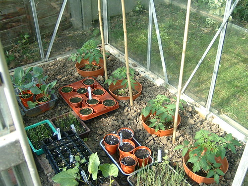 09_May 2008_Greenhouse | by London Permaculture