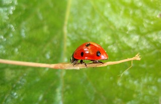 Ladybird Profile | by Neeku