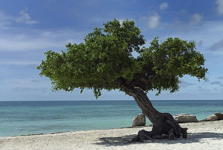 Aruba Divi Tree - Eagle Beach | by Serge Melki