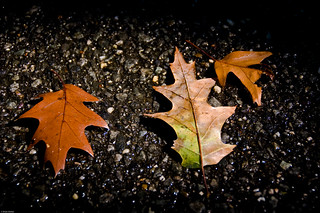 Leaves On Wet Pavement | by GraspTheMoment.com