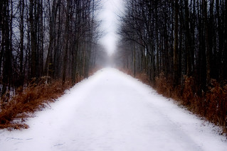 Snowy Path | by Craig - S