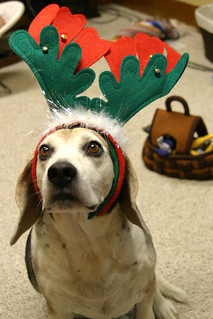 Reindeer Beagle | by chimothy27