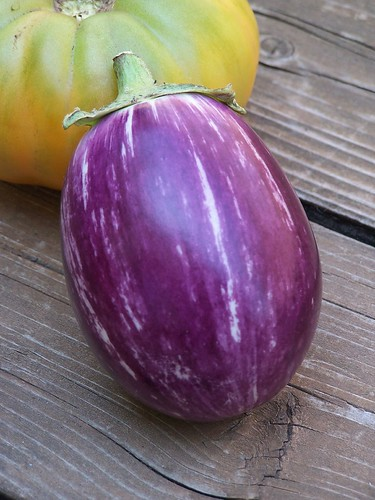 First eggplant | by dsa66503