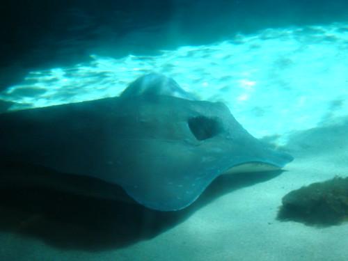 Image Result For Aquarium In Coney