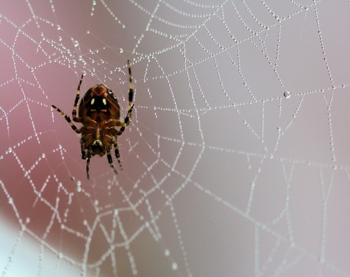 Caught in your Pretty Pink Web~keh | by *GloriousNature*bySusanGaryPhotography