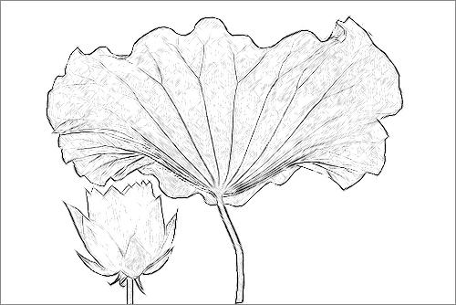 Lotus flower sketch imgp3808 lotus flower sketch penci flickr lotus flower sketch imgp3808 by bahman farzad mightylinksfo