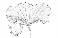 Lotus flower sketch imgp3808 lotus flower sketch penci flickr lotus flower sketch imgp3808 by bahman farzad mightylinksfo