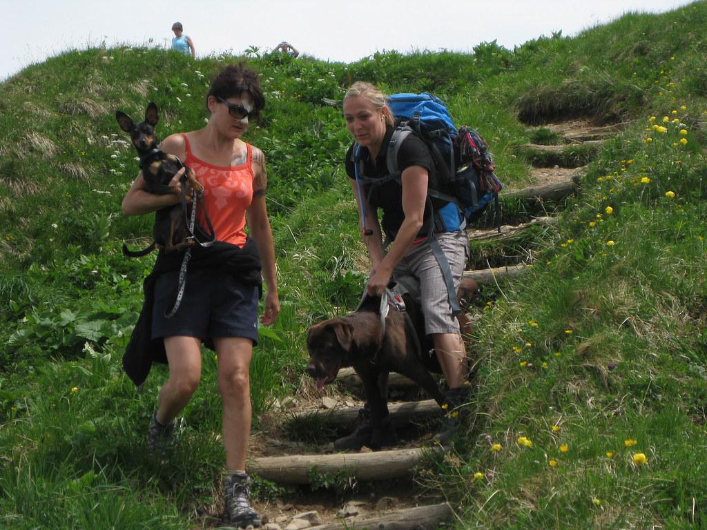 Klettergurt Hund : Toller hund mit klettergurt ringo schtarr flickr