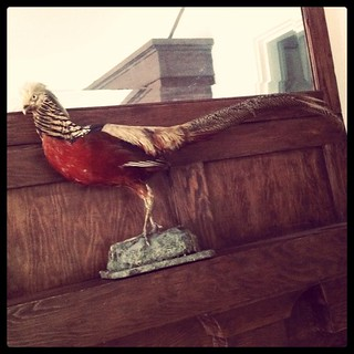My antique pheasant has arrived from England and he is splendid. | by liquidnight
