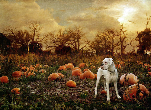 The Pumpkin Patch | by dog ma