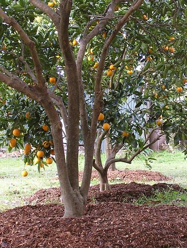 Citrus Grove New Homes Fontana Ca