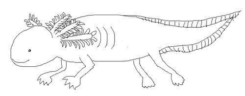 axolotl coloring pages - photo#19