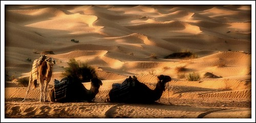 Lawrence de Arabia | by luisjvs