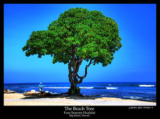 The Beach Tree Four Seasons Hualalai Big Island Hawaii | by j glenn montano 3