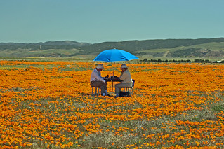 Poppy Couple | by Jeff D. Muth