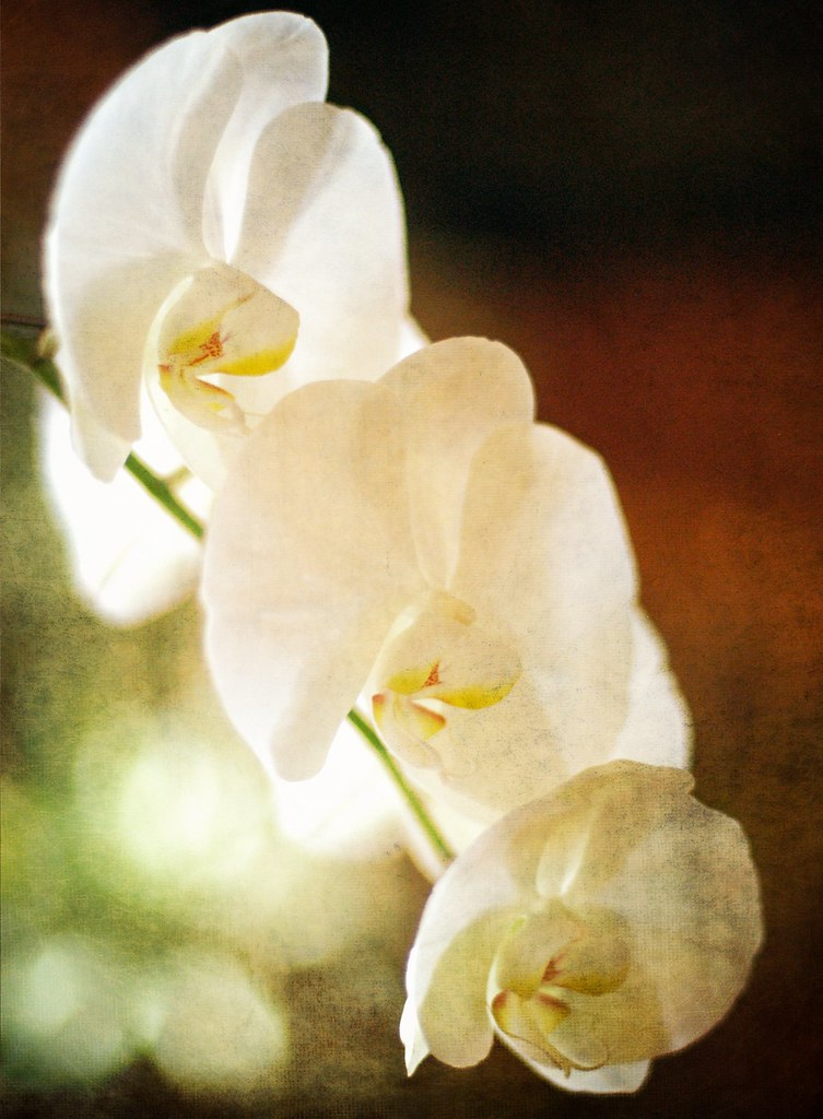 The Orchid Flower Poem Just As I Wonder Whether Its Going Flickr