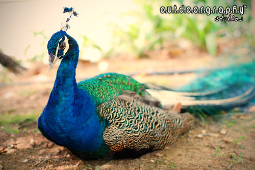 Outdoorgraphy™ : Resting Beauty | by Sir Mart Outdoorgraphy™