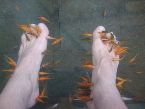 Fish tickle doctor fish clean feet at i believe for Fish cleaning feet
