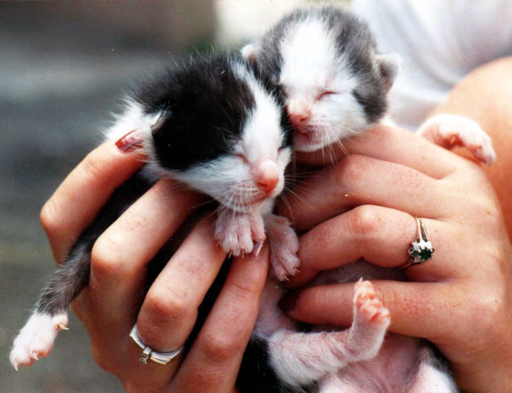 Baby cats our baby cats in st lucia 1980 ralf becker flickr baby cats by smokykater 600k views thecheapjerseys Images
