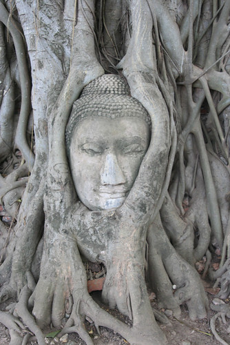 old buddha's portrait in a tree roots | by Gret@Lorenz