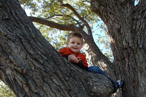 Micah climbing a tree in Newport News | by amywirtz76