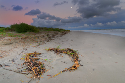 Sea grass and Moon | by Robert Donovan