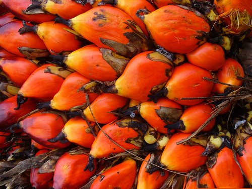 Dende Palm Fruit | by The Hungry Cyclist