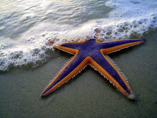 Purple and Orange Starfish on the Beach | by TheMarque