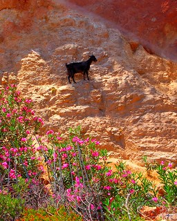 Black goat on a mountainside on the Greek island of Crete | by Peace Correspondent