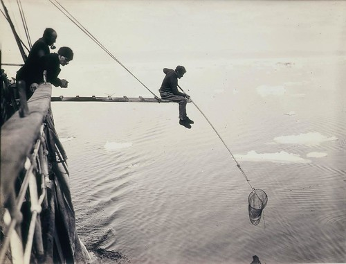 Hamilton hand-netting for macro-plankton from Aurora / by Frank Hurley | by State Library of New South Wales collection