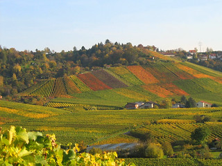 Colourful Vineyards Quilt - Fall Landscape in Germany | by Batikart