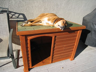 Rusty on his dog house | by Dan Harrelson