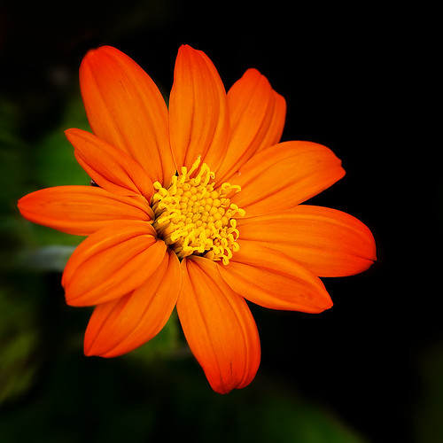 Orange Delight | by NatureWalk
