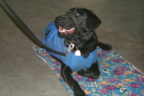 Paws Dog Training Bickington