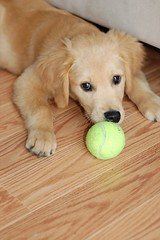 With the tennis ball | by EmilyPosts