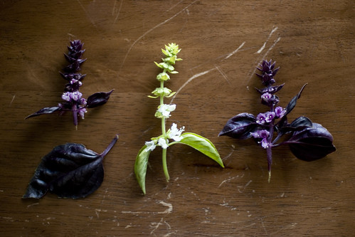 basil flowers | by unruly things