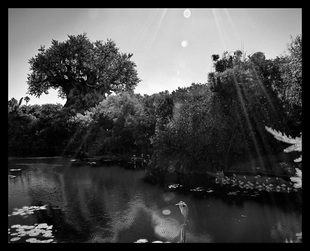 Disney Wonderful World Of Color In Black White Tre Flickr
