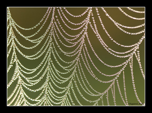 Dew on Spider Web | by Squirrel_bark