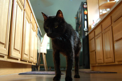 Cat Ate New Food Watery Eye Next Day