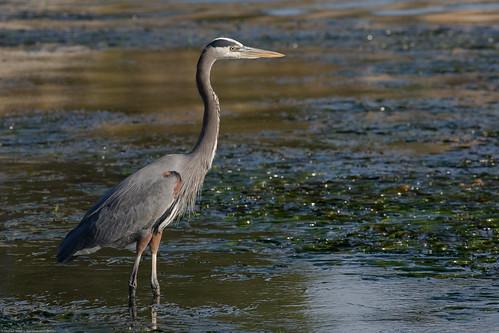 Blue Heron Beach Resort Lake Buena Vista Fl