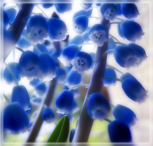 Blue for You | by joli <3