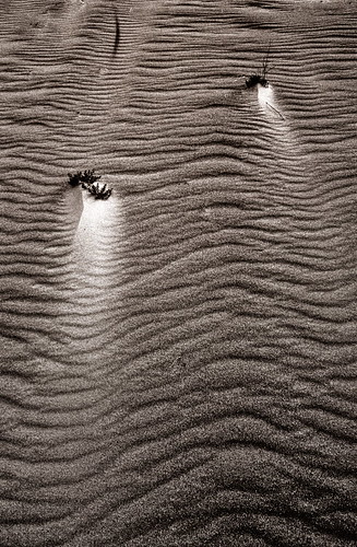 Baltic Dunes | by schickhofer-photography
