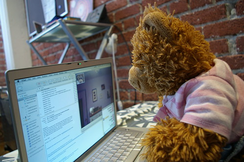 Bear using computer | by fredcamino