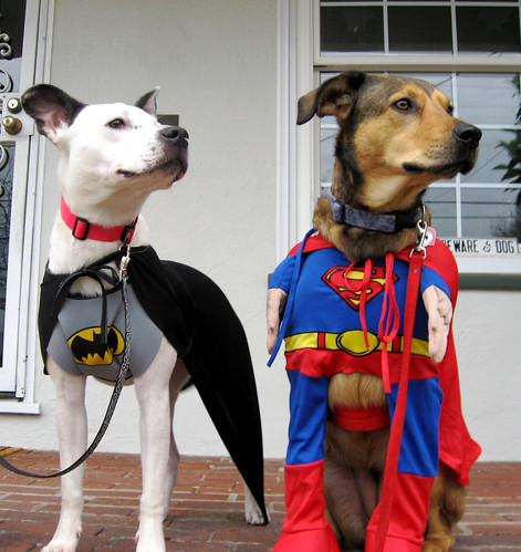Batdog & Superpuppy Keeping a Watchful Eye over El Cerrito 1 of 3 | by marks_aaron