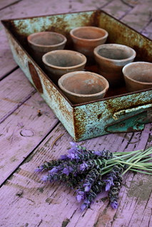 Rusty tray with lavender | by Tricia Breidenthal