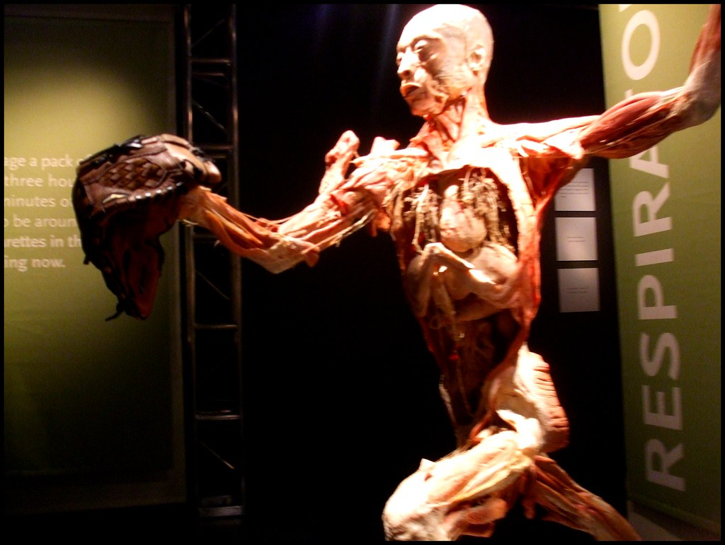 Human Body Bodies The Exhibition Is A Controversial Exhibi Flickr