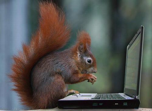 Image result for squirrel on computer
