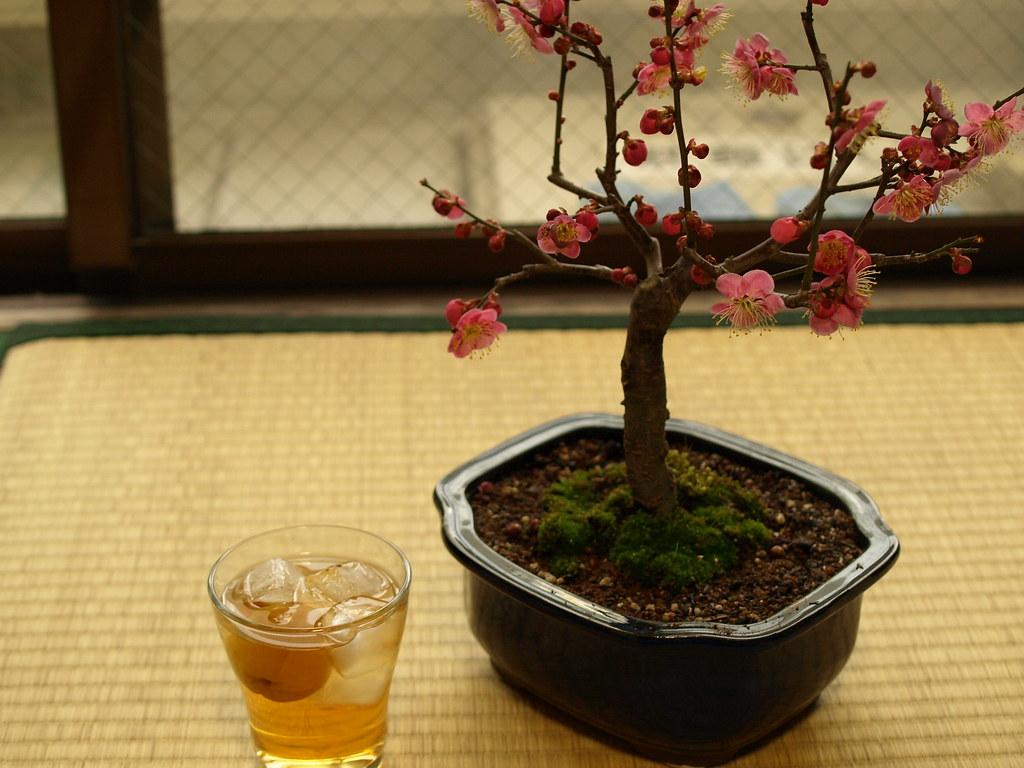 梅と梅酒 (57)