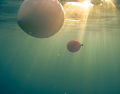 Cool Balloons Underwater | by javiy