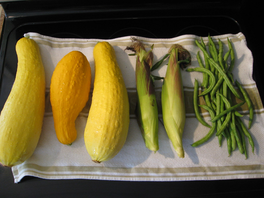 Three Sisters Crops. Corns, Beans, and Squash.